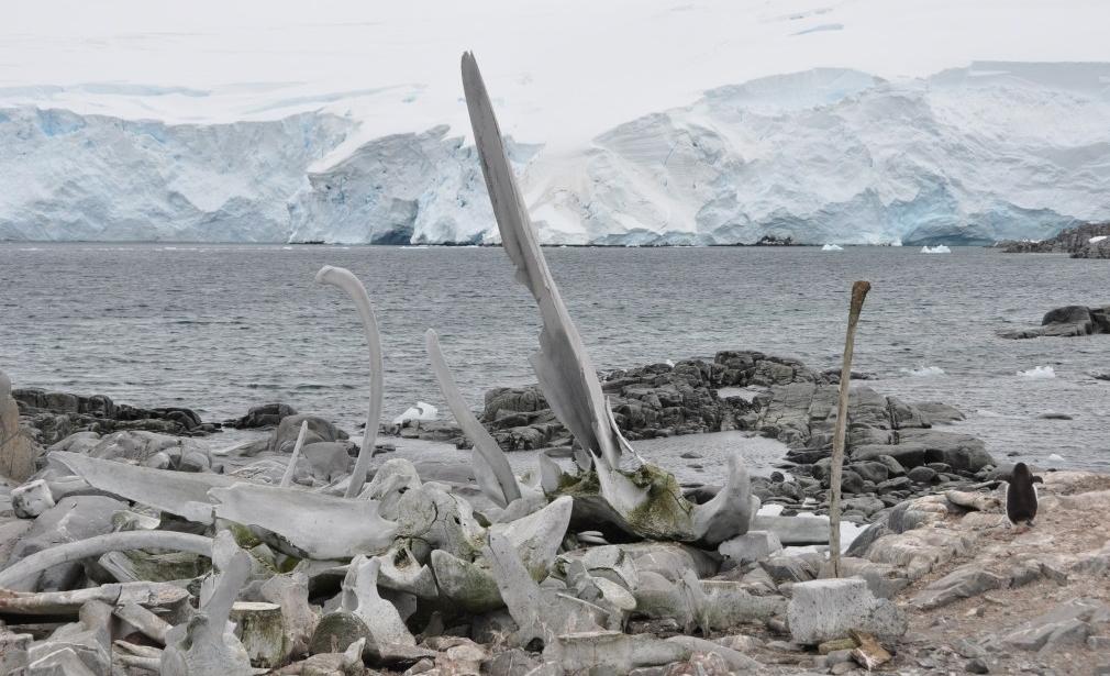 Whale_Bones_near_Port_Lockroy