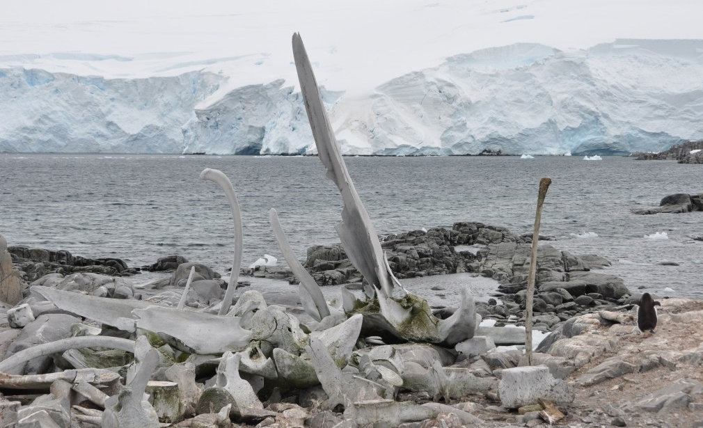 Whale_Bones_near_Port_Lockroy