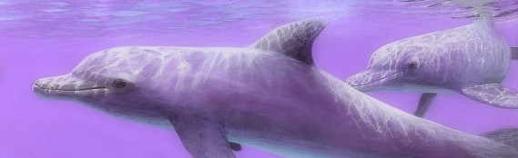dolphin painting edit 1
