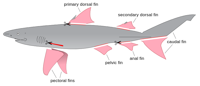 Shark_finning_diagram.svg