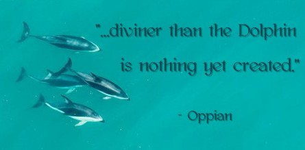dolphin quote graphic1